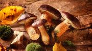 Najlepsze sposoby na przechowywanie grzybów