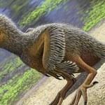 Najmniejsza skamieniałość ptaka w historii