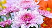 Najmodniejsze kwiaty na ślub
