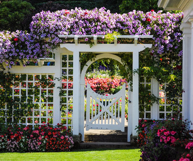 Najpiękniejsze egzotyczne rośliny do ogrodu