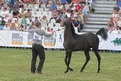 Najpiękniejsze konie świata w Janowie Podlaskim