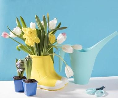 Najpiękniejsze kwiaty na Wielkanoc: Kiedy je uprawiać i jak pielęgnować?