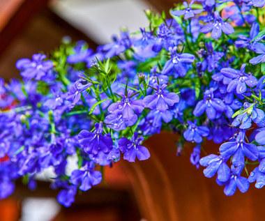 Najpiękniejsze kwiaty zwisające, które są łatwe w uprawie. Które wybrać?