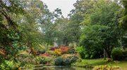 Najpiękniejsze ogrody świata: Exbury Gardens