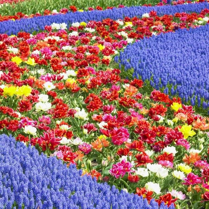 Najpiękniejsze ogrody świata: Keukenhof /123/RF PICSEL