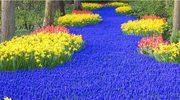 Najpiękniejsze ogrody świata: Keukenhof