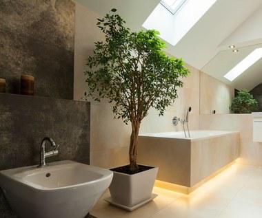 Najpiękniejsze rośliny do łazienki