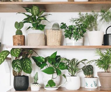 Najpiękniejsze rośliny doniczkowe do zacienionych miejsc
