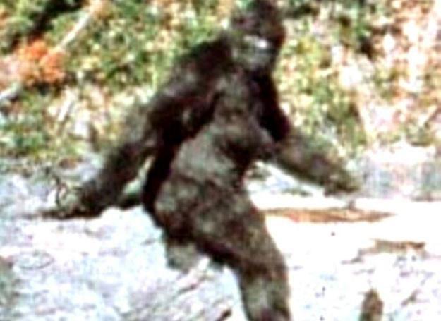 Najsłynniejsze zdjęcie Bigfoota, amerykańskiej odmiany yeti, zdjęcie wykonano 20.10.1967  r. /MWMedia