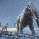 Film (2009)[Mammoth] Reż.Lukas Moodysson