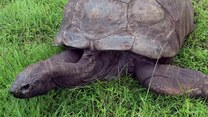 Najstarsze zwierzę na świecie! Może mieć 200 lat!