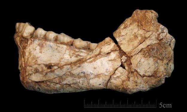 Najstarszy fragment kości homo sapiens /JEAN-JACQUES HUBLIN /PAP/EPA