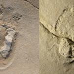 Najstarszy ślad stopy hominidów ma 6 mln lat. Odkrycia dokonał Polak