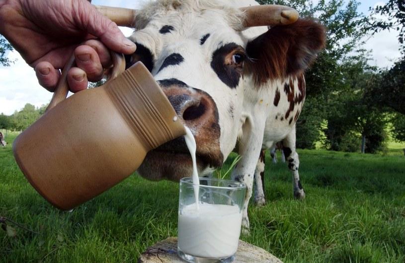 Najwięcej CLA zawiera mleko od krów wypasanych na górskich pastwiskach /AFP