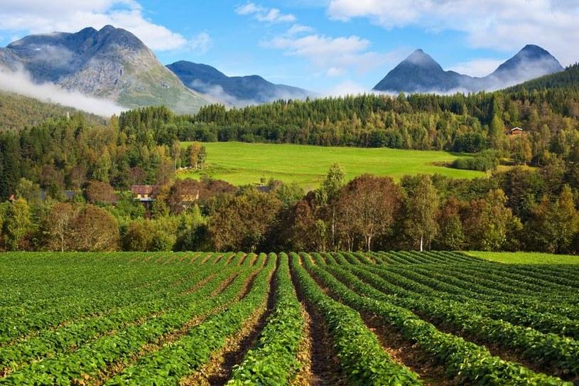Najwięcej ofert pracy można znaleźć przy zbiorach truskawek, malin i borówek /123RF/PICSEL
