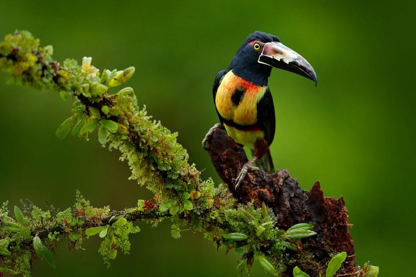 Największą atrakcją rezerwatu są ptaki /123RF/PICSEL