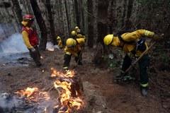 Największe pożary w historii Chile. Płoną lasy w całym kraju
