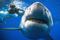 Największy żarłacz biały w historii! Olbrzyma uchwycono na wideo