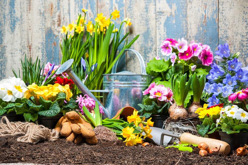 Największym zagrożeniem dla roślin w ogrodzie są przymrozki /123RF/PICSEL