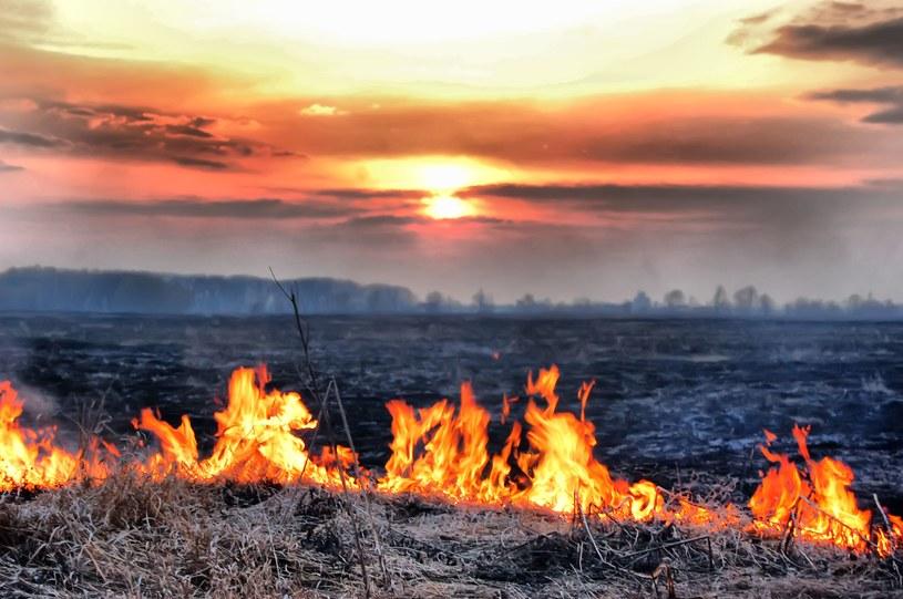 Najwyższy, trzeci stopnień zagrożenia pożarowego na Mazowszu /123RF/PICSEL