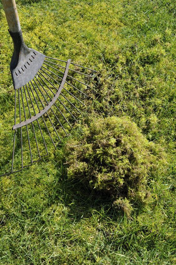 Nakłuwanie trawy /©123RF/PICSEL