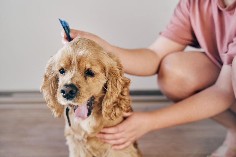 Należy dbać o regularne odrobaczanie zwierząt /123RF/PICSEL