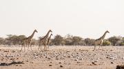 Namibia - Park Narodowy Etosza