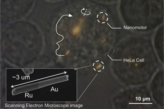 Nanosilniki napędzane ultradźwiękami - nieinwazyjne i skuteczne? /materiały prasowe
