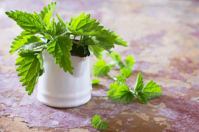 Napar z korzeni pokrzywy dobrze wpływa na zdrowie trzustki /123RF/PICSEL
