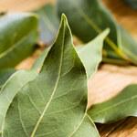 Napar z liści laurowych