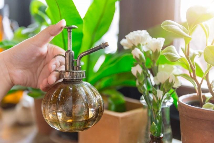 Naparem podlej kwiaty /©123RF/PICSEL
