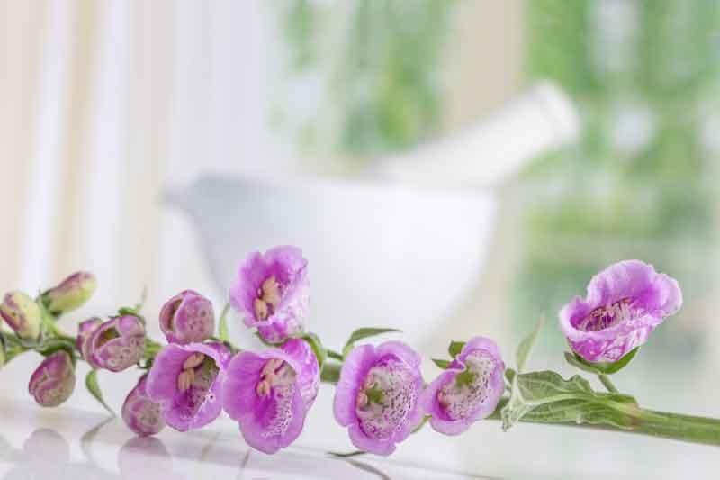Naparstnica rośnie w wielu ogrodach, ale nie wolno stosować jej samodzielnie /123RF/PICSEL