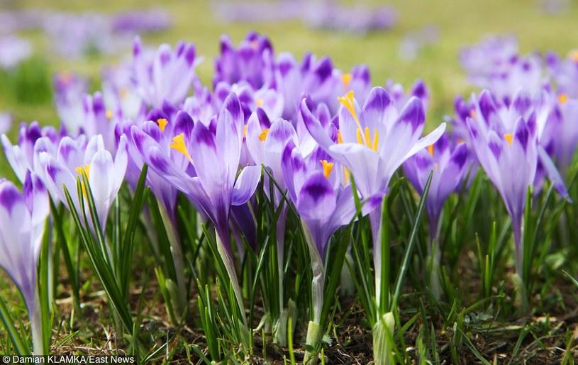 Naprawdę ciepła wiosna tuż tuż /Damian Klamka /Reporter