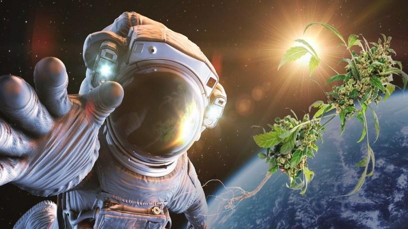 NASA dostarcza astronautom, za pomocą SpaceX, zapas konopi indyjskich /Geekweek