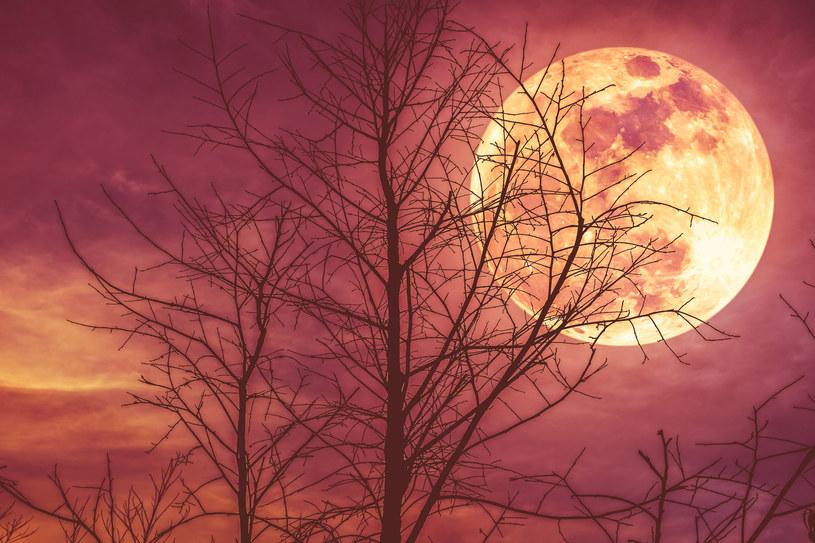 Nasi przodkowie wierzyli w moc księżyca. Warto na nowo zainteresować się jego wpływem na nasze życie /123RF/PICSEL