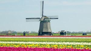 Nasi rodacy w kraju tulipanów - raport o imigrantach z Polski i Bułgarii
