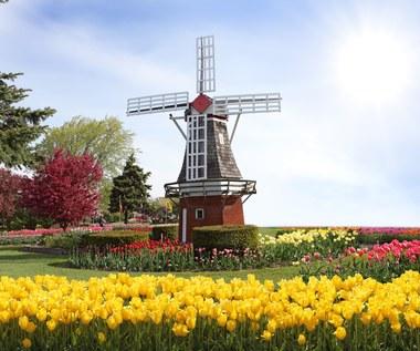 Nasi w kraju tulipanów: Liczenie holenderskich Polaków