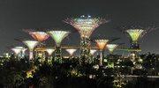 Nasi w Singapurze