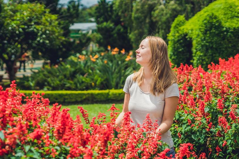 Nasiona kwiatów, które mają długi okres wegetacji, np. lobelii, szałwii błyszczącej, żeniszka, już teraz dobrze byłoby wysiać w domu. /123RF/PICSEL