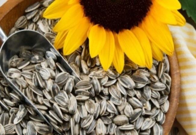 Nasiona słonecznika w zamrażarce /© Photogenica
