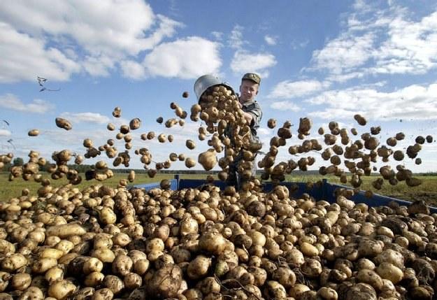 Nasz kraj utrzymał najwyższy odsetek populacji zatrudnionej w rolnictwie /AFP