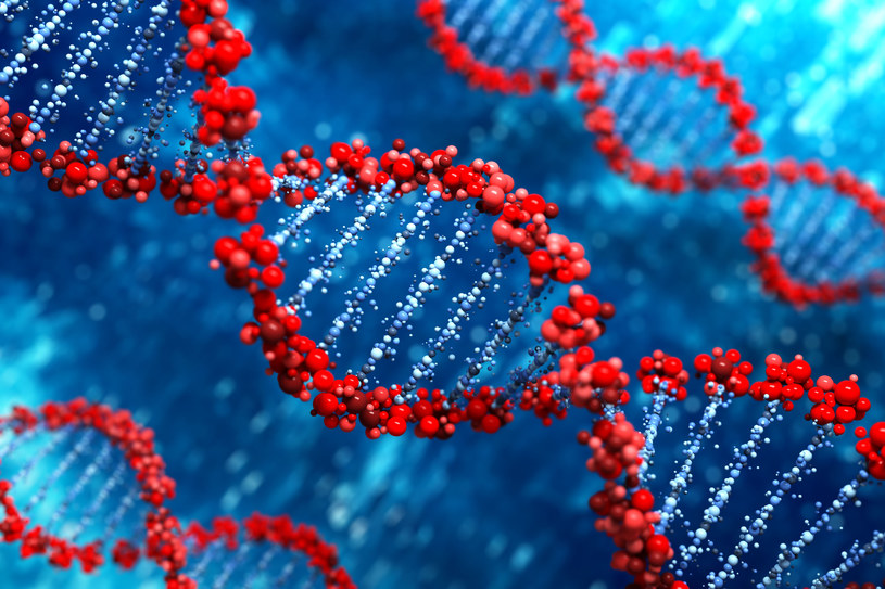 Nasze DNA zawiera 22 000 genów /123RF/PICSEL