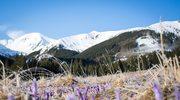 Nasze góry kipią od kwiatów