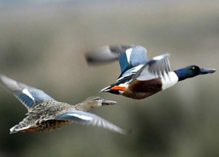 Nasze myśli są jak ptaki - latają wysoko, ale gniazda mają na ziemi /AFP