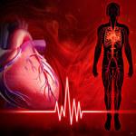 Nasze serce ma wewnętrzny zegar, niezależny od reszty ciała
