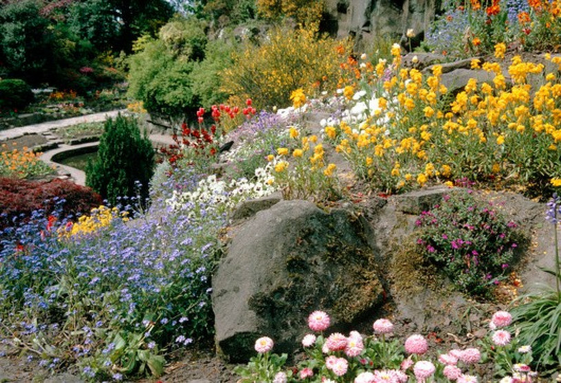 Naturalistyczny ogród skalny z kwitnącymi roślinami /Science Photo Library /East News