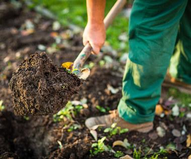 Naturalne metody zapobiegania chorobom grzybowym w ogrodzie i sposoby ich zwalczania