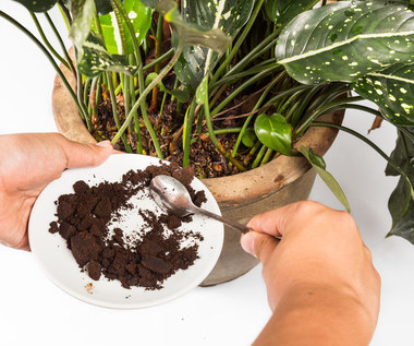 Naturalne nawozy do roślin doniczkowych