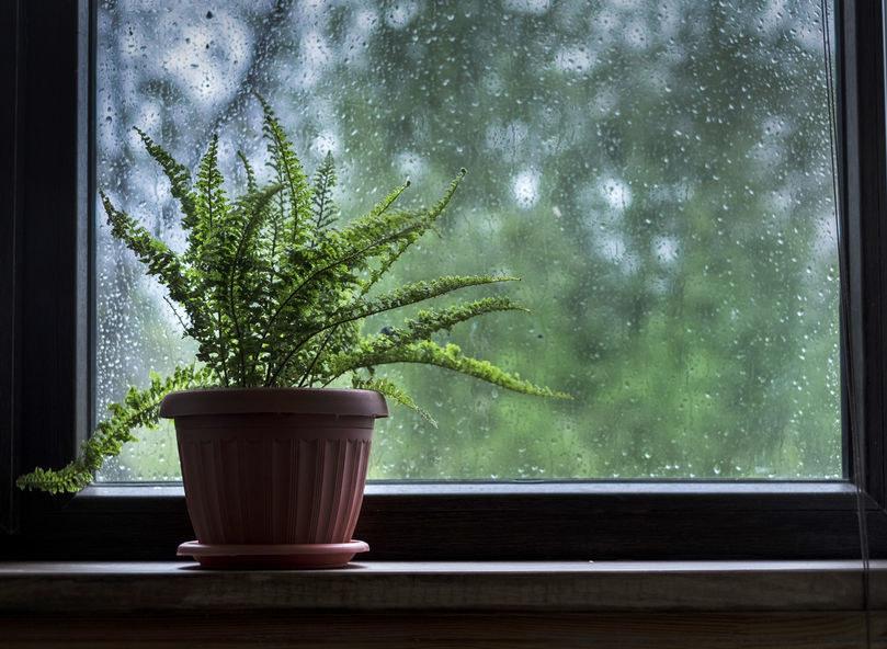 Naturalne pochłaniacze wilgoci /©123RF/PICSEL