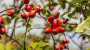 Naturalne recepty na odporność